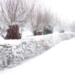 winter-2010-013